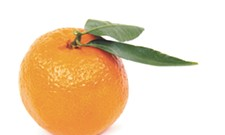 SUPERFOOD | Oh, Clementines!