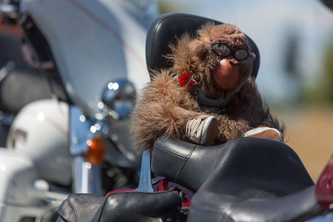 Suzzi, a stuffed monkey, belonging to Fred Taylor, always sits on the back of his motorcycle. - MATT WEIGAND