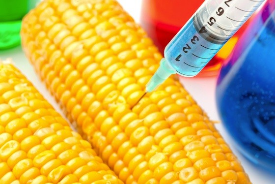 blueintocorn.jpg