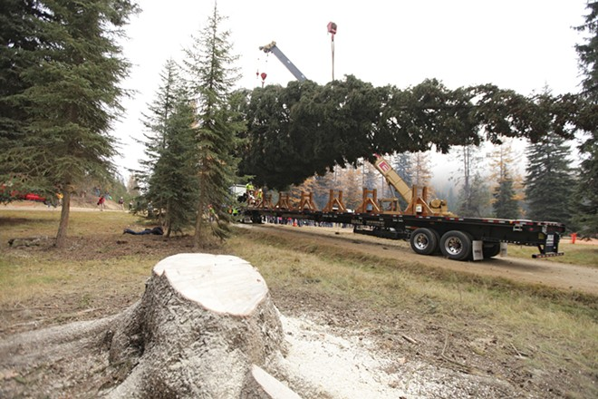 The 88-foot Engelmann Spruce is lifted by a crane. - YOUNG KWAK