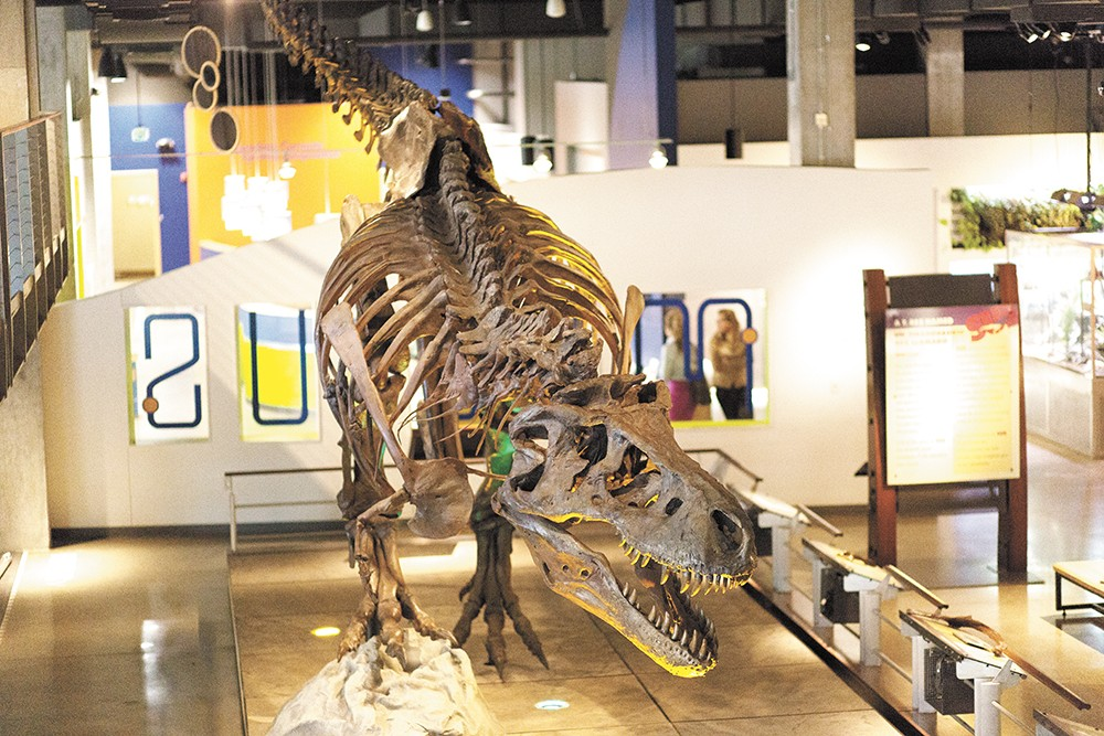 The fossil replica of Sue the T. rex required seven people and a forklift to assemble. - YOUNG KWAK
