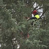PHOTOS: U.S. Capitol Christmas Tree Cutting