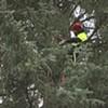 PHOTOS: U.S. Capitol Christmas Tree Cutting