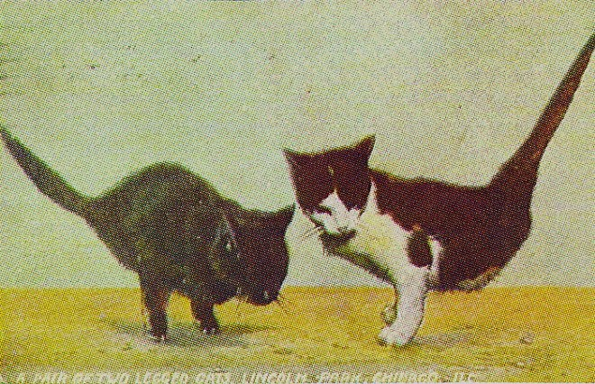 This 1909 postcard is one of the images planned to be featured in the Half-Cat book, and features real two-legged kittens born in Australia. A story about these strange kittens ran in the Pittsburgh Press on March 24, 1909.