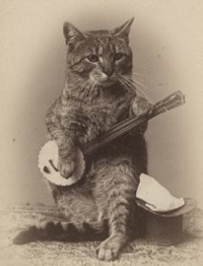 _resized_225x295_banjo_cat.jpg