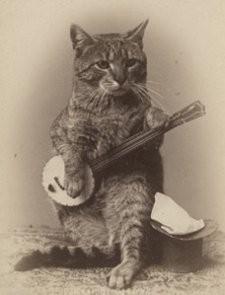 _resized_225x295_banjo_cat.jpg