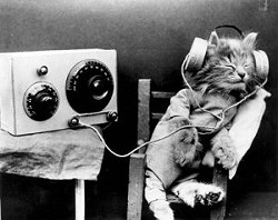 _resized_300x237_cat_headphones.jpg