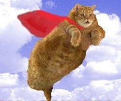 flying_cat_thumb.jpg