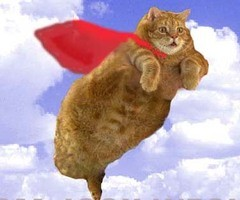 flying_cat_thumb.jpg