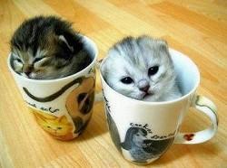 _resized_300x223_funny_cats.jpg