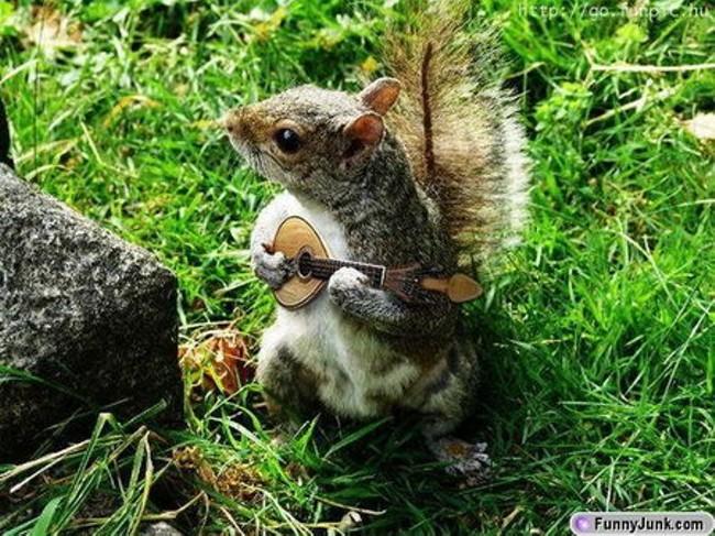 banjo_squirrel.jpg