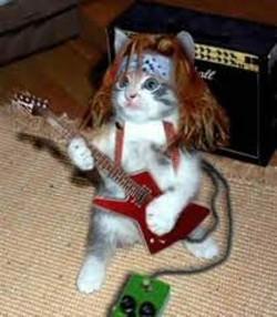 cat_hair.jpg