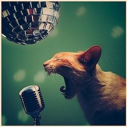 rock_cat_roll.jpg