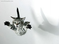 flying_cat_23_by_haytapburcak.jpg