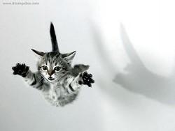 flying_cat_23_by_haytapburcak.jpg