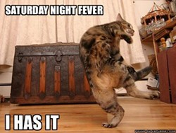 saturdaynightfevercat.jpg