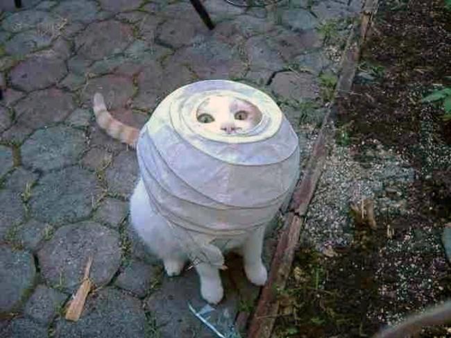 1443_silly_cat.jpg