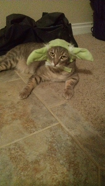 Thunder, of Spokane, channeled Yoda this year. Submitted by Raevyn W., an Inlander staffer.