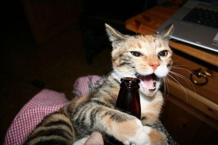 cats_beer_05.jpg