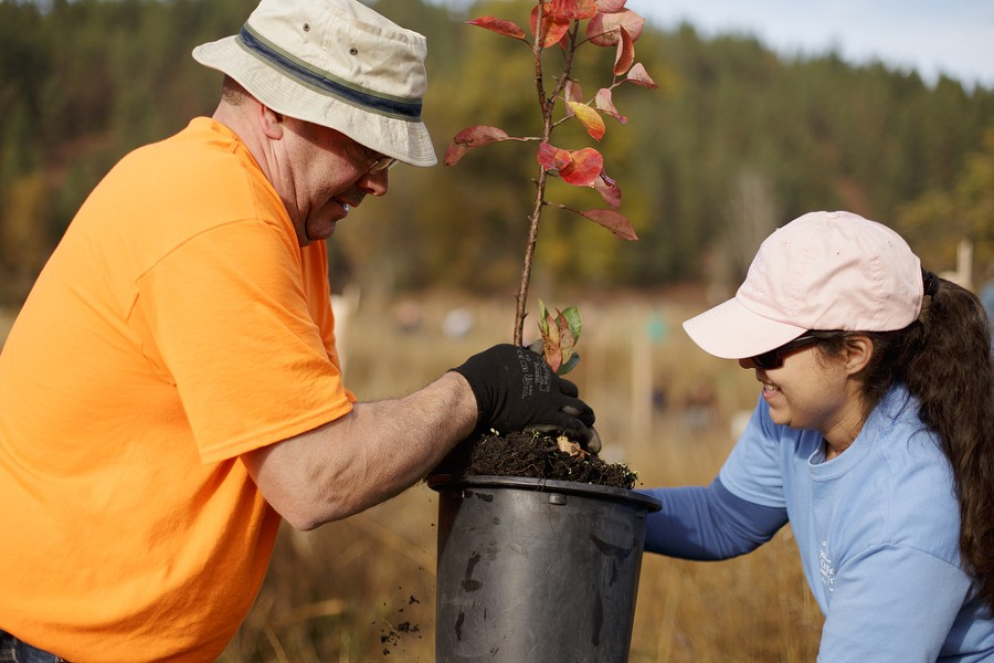 Todd Ross, left, and his wife Trish remove choke cherry tree from a container. - YOUNG KWAK