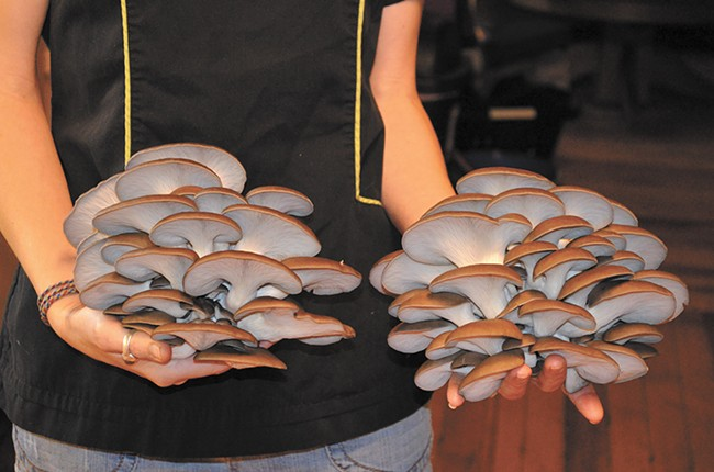 Fungimental Farms are almost entirely self taught when it comes to the science of fungi.