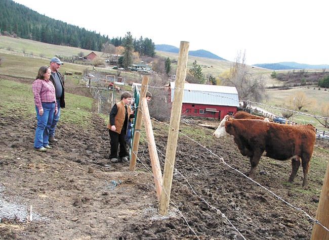 Cross-Cut Farms raises cattle, chicken and vegetables near Post Falls. - CARRIE SCOZZARO