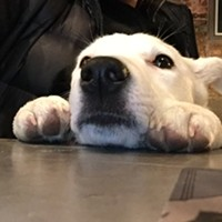 Some of our favorite dog-friendly places in Spokane to eat and drink