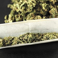 "A new study at WSU analyzes ""micro dosing"" with marijuana"