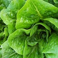 Hail Caesar salad! Romaine is safe to eat again