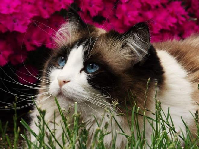 carol-kitty.jpg
