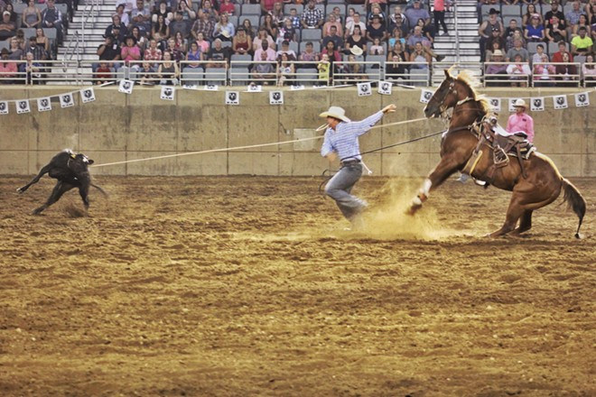 A cowboy dashes to tie up a steer in the tie down roping competition. - QUINN WELSCH PHOTO