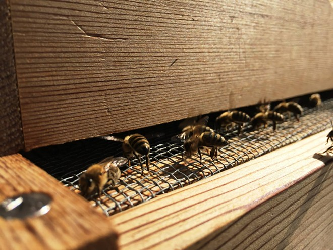 Bees enter and exit the hive through the aperture by the ledge. - ELIZABETH HIGGINS PHOTO