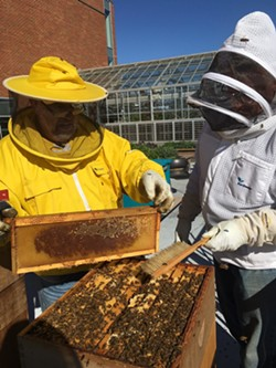 Two beekeepers dust bees off a hive frame. - ELIZABETH HIGGINS PHOTO
