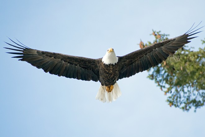 Don't approach the eagles, because they'll fly over your head anyway. - WILSON CRISCIONE PHOTO