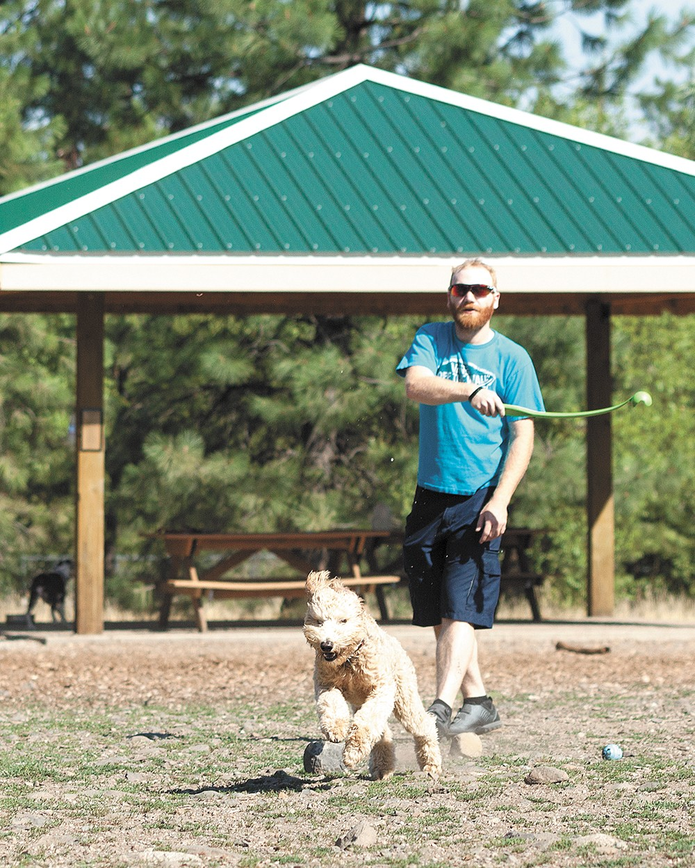 SpokAnimal Dog Park at High Bridge features 11 acres, including a separate area for smaller dogs. - TIMOTHY PHILLIPS PHOTO