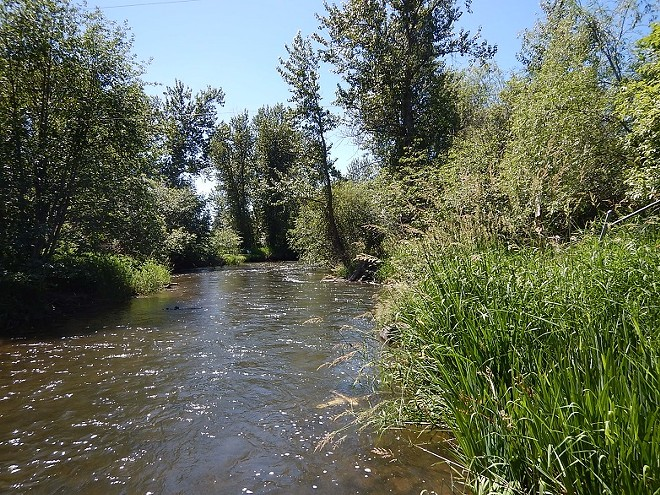 Junior water rights holders on the Little Spokane River have been told they will likely have to stop or curb their use of the water for irrigation (largely for lawns) if the river flow continues to dip below a minimum level deemed necessary for fish and watershed health. - DEPARTMENT OF ECOLOGY PHOTO