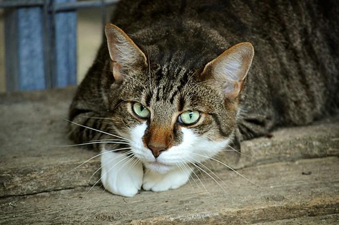 cats-eyes-2671903_1920.jpg