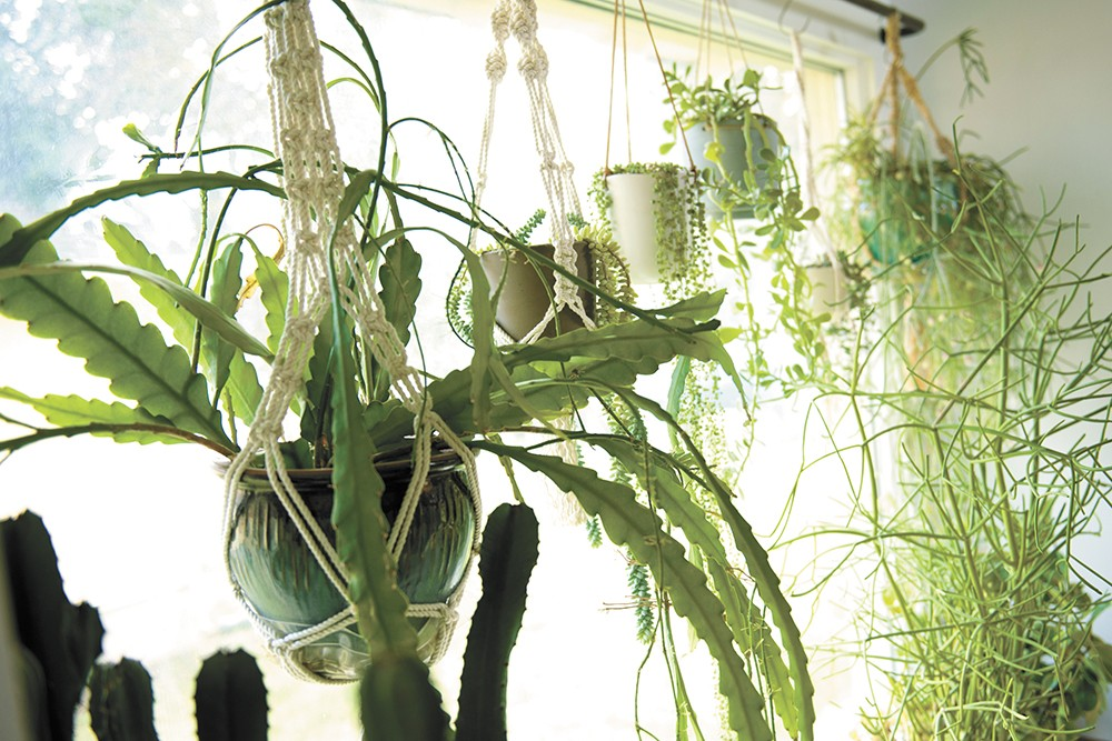The benefits of indoor gardening can make your socially distanced life better. - YOUNG KWAK PHOTO