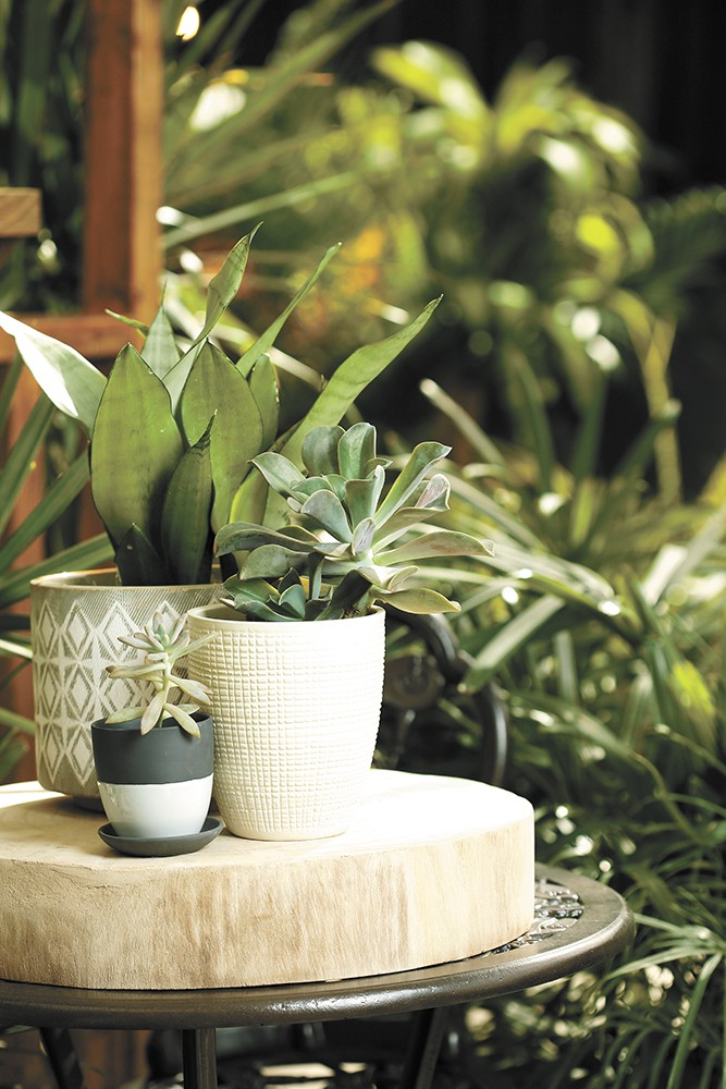 You don't need a green thumb to make your apartment look like you do. - DEREK HARRISON PHOTO