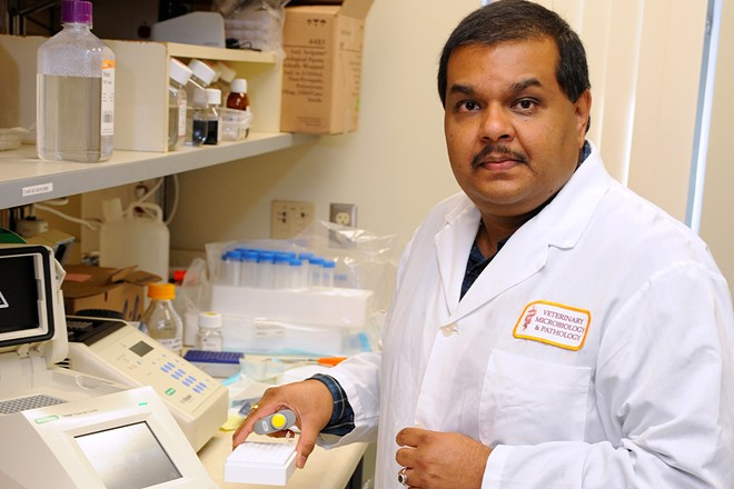 A discovery by Santanu Bose, a viral infection researcher in WSU's Department of Veterinary Microbiology and Pathology, could help treat sick COVID-19 patients - WASHINGTON STATE UNIVERSITY PHOTO