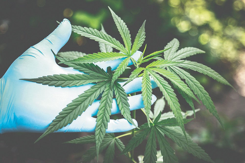 Federal regulations stand in the way of the best possible cannabis research.