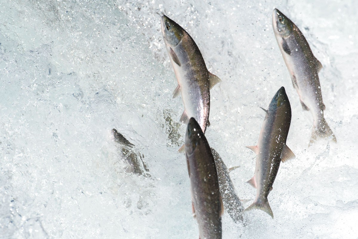 At least one salmon advocate believes people are starting to pay attention.