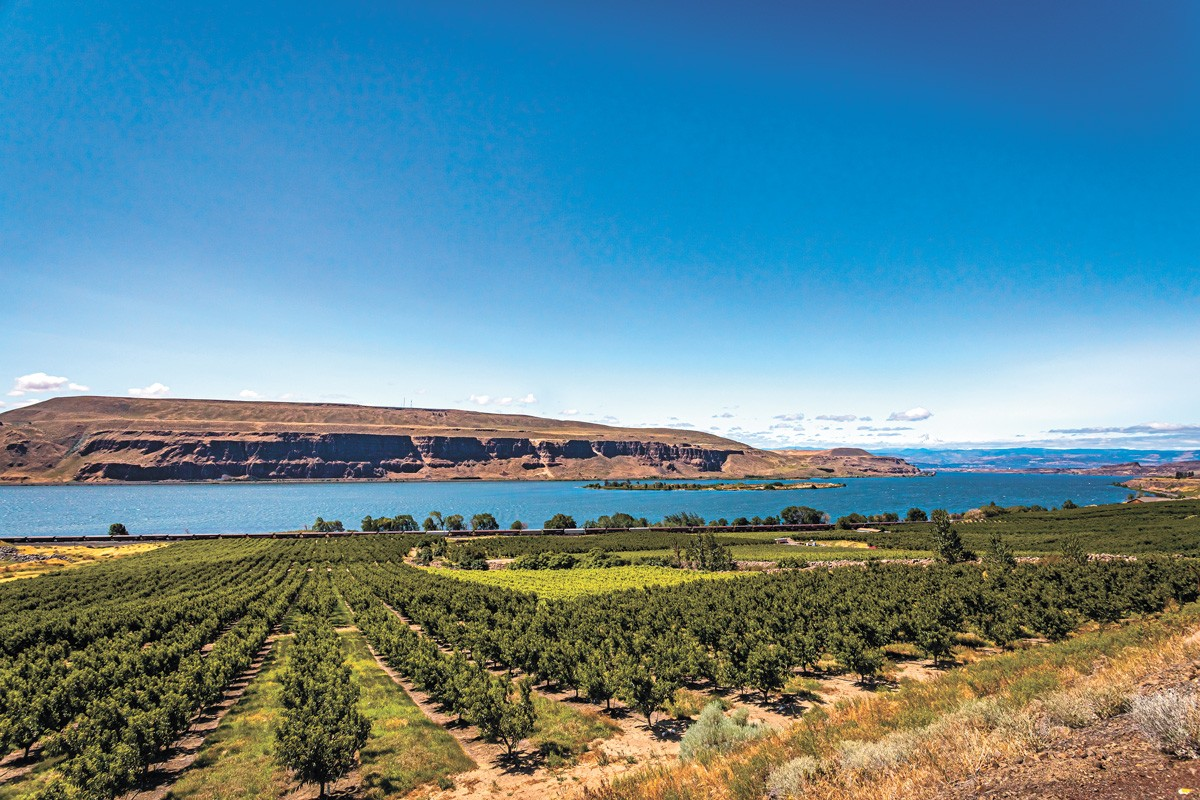 One of many apple orchards along the Columbia River in Washington.