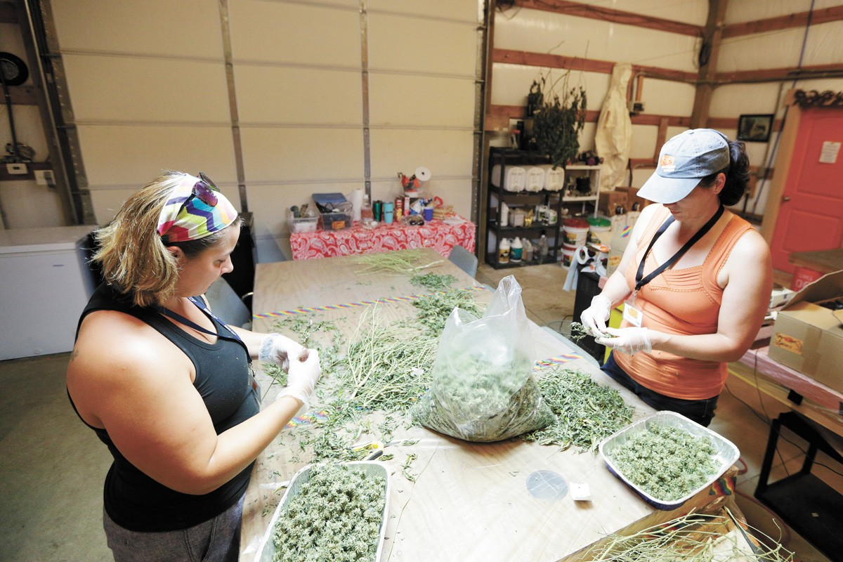 Orange State Cannabis employees Autumn Wilson (left) and Amy Livingstone process buds in 2019. - YOUNG KWAK PHOTO