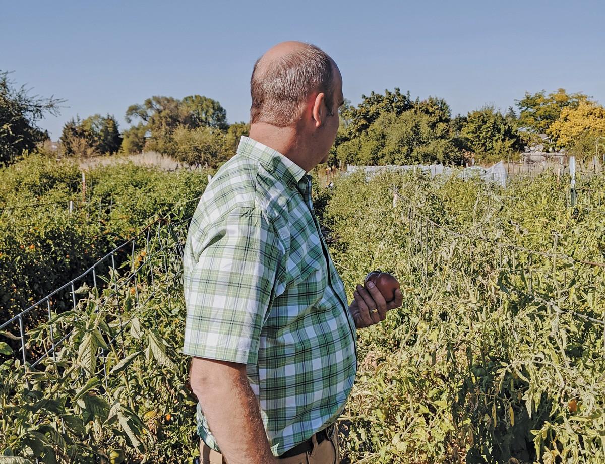 Dan Jackson and the tomatoes of Jackson Farm. - LINC FOODS PHOTO