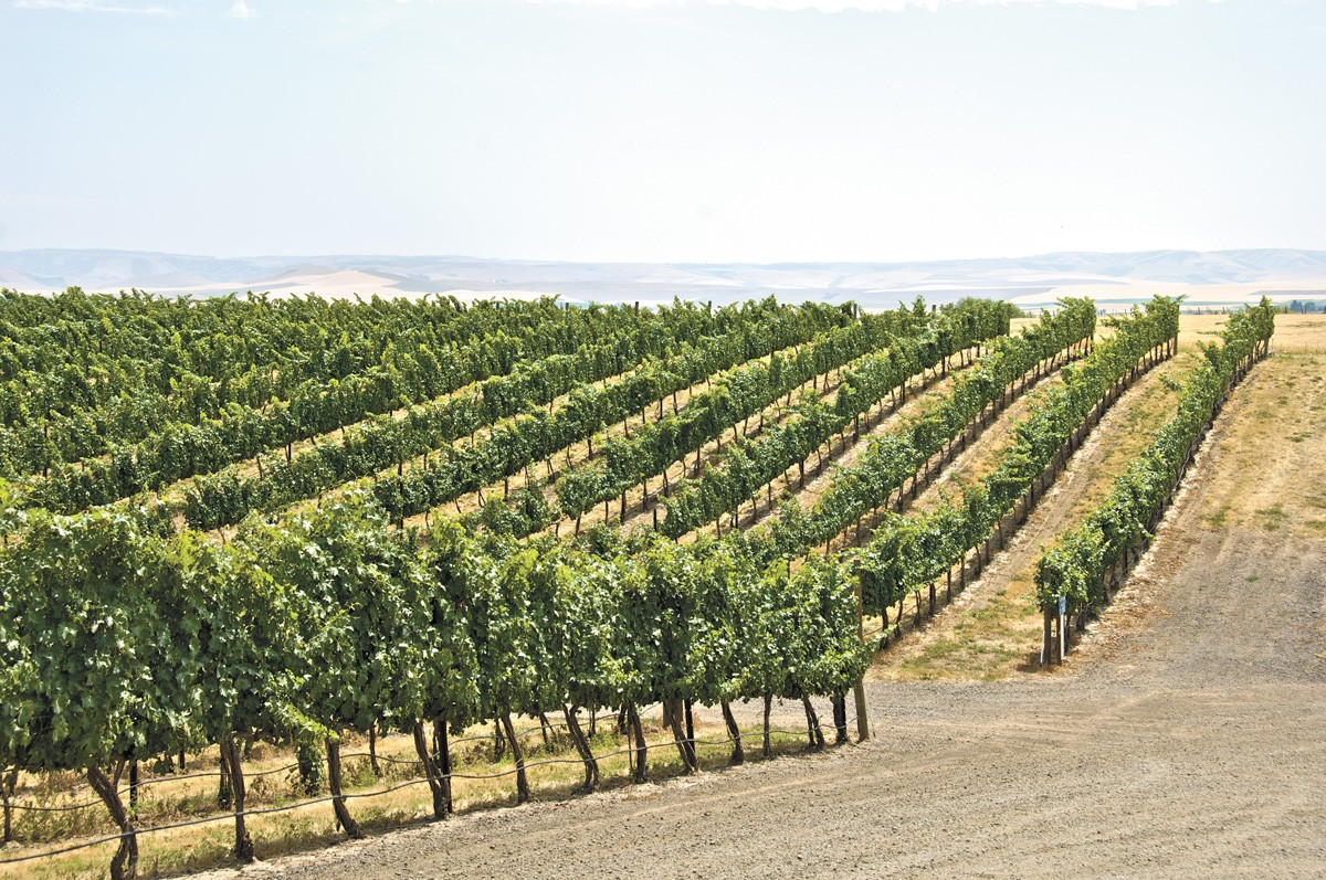 The smart folks in the Walla Walla Valley have created a self-guided scavenger hunt with 12 reasons to drink wine.