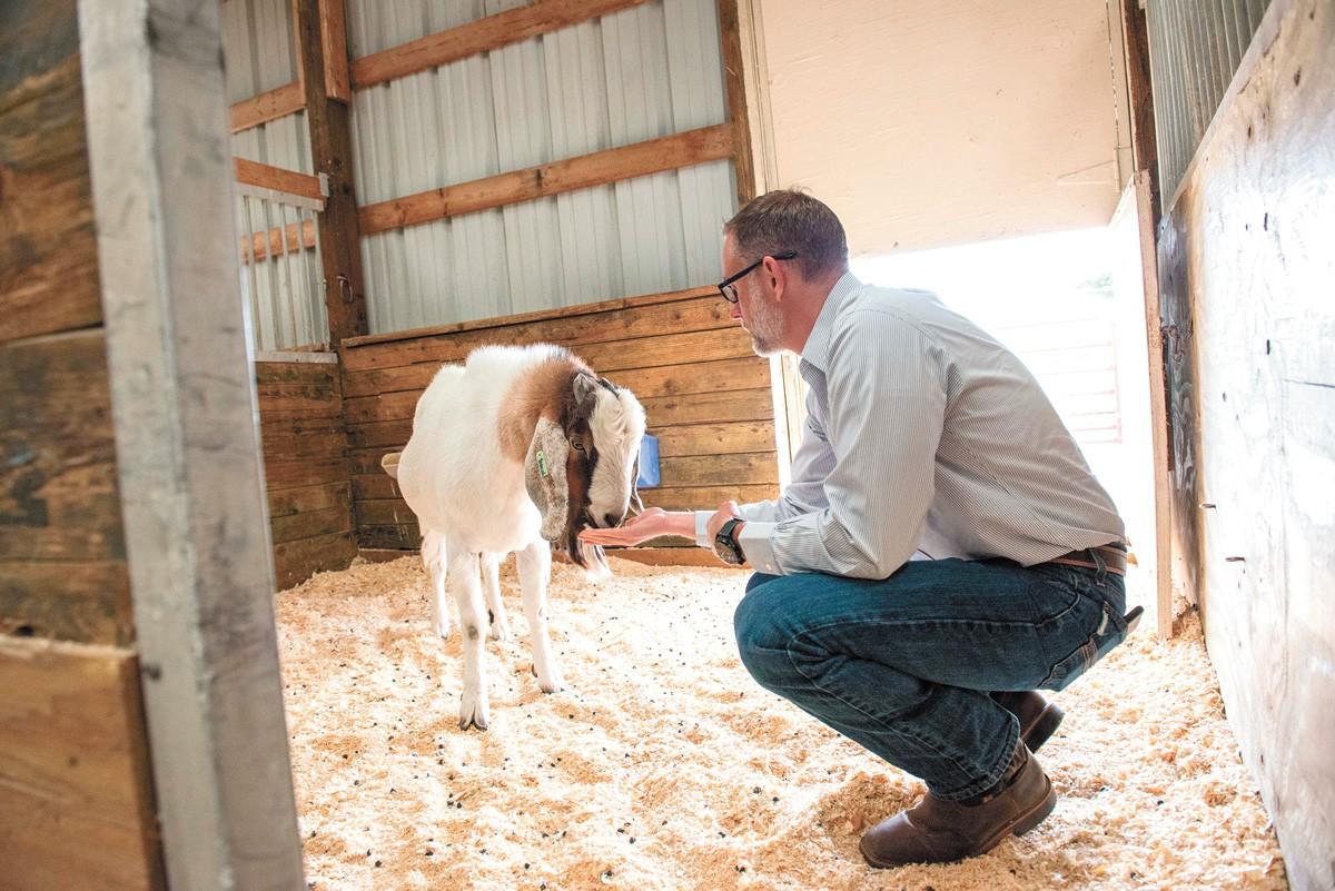 Inside WSU's goat barn. - DANIEL WALTERS