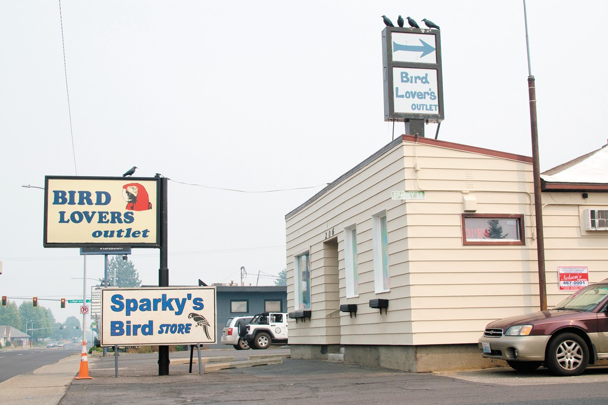 The Spokane County Regional Animal Protection Service (SCRAPS) is investigating Sparky's for animal cruelty following Rio's death. - WILSON CRISCIONE PHOTO