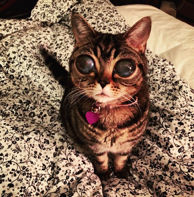 Matilda's other-worldly gaze is due to a rare eye condition. - INSTAGRAM/ALIENCATMATILDA