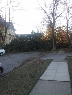 A downed tree in Browne's Addition - JAKE THOMAS